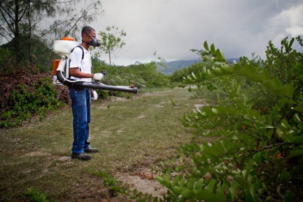 pest-control-in_seychelles_fungus_gnat