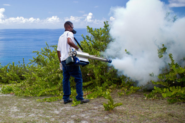 pest-control-in_seychelles_hairy_caterpillars