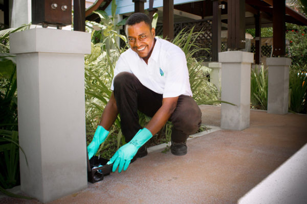 pest-control-in_seychelles_rodents_rats