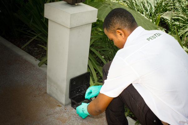 pest-control-in_seychelles_rodents_rats_mice