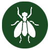 pest-control-in-seychelles_flies-icon